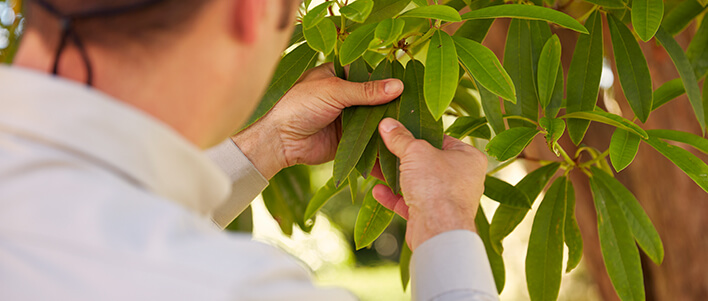 TruGreen certified tree and shrub expert analyzing shrub health.